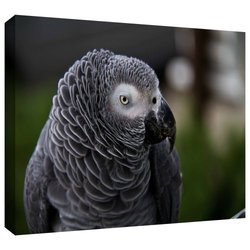 "Art Wall 16""x22"" 'Parrot' by Lindsey Janich Photographic Print on Canvas"
