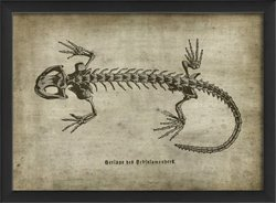 The Artwork Factory Lizard on White Framed Print