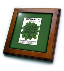 3dRose Spinach Norfolk Savoy Vegetable Seed Packet Framed Tile - 8 x 8""
