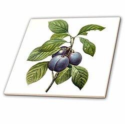 "3dRose Watercolor Fruit Garden Plums Ceramic Tile - Size: 6"""