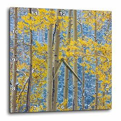 USA, Colorado, Grand Mesa. Autumn Forest Scenic. - Wall Clock, 10 by 10-Inch (dpp_205740_1)