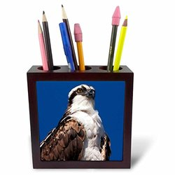 USA California La Jolla Rare Osprey Tile Pen Holder - 5""