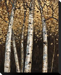 """Shimmering Birches 2 by Arnie Fisk Stretched Canvas Print - 20"""" x 17"""""""