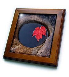 ft_209965_1 Michigan, Black River Red Maple Leaf in a Small Lava Hole Framed Tile, 8 by 8""