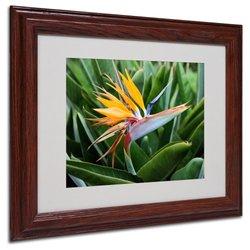 "Trademark Fine Art 'Bird of Paradise' 11"" x 14"" Wood Frame Art"