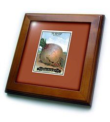 "3dRose Turnip Rutabaga Root Seed Packet Framed Tile - Size: 8""x8"""