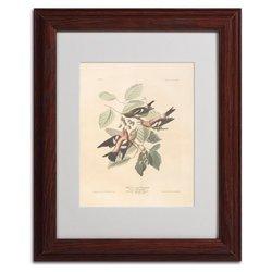 """Trademark Fine Art 'White-Winged Crossbill' 11"""" x 14"""" Wood Frame Art"""
