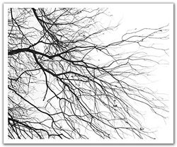 JP London POSLT2260 uStrip Lite Removable Wallpaper Decal Mural Tree Branches Forest Silhouette Art Piece, 24-Inch x 19.75-Inch