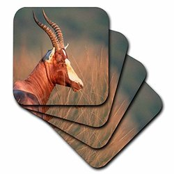 cst_206181_3 Blesbok in A Forest, Tala Game Reserve, Kwazulu-Natal, South Africa. Ceramic Tile Coasters, (Set of 4)