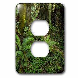 lsp_208284_6 Del Norte Coast Redwoods National Park, California 2 Plug Outlet Cover