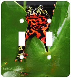 lsp_83808_2 Fire Belly Toad, Native to China Na02 Dno0112 David Northcott Double Toggle Switch