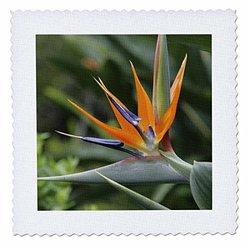 Bird of Paradise, Kula Botanical Gardens, Hawaii - Us12 Dpb0020 - Douglas Peebles - Quilt Square, 12 by 12-Inch (qs_89515_4)