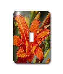 3dRose LLC lsp_9046_1 Orange Lily, Single Toggle Switch