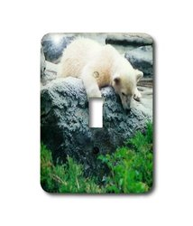 3dRose LLC lsp_17959_1 Curious Polar Bear Cub - Single Toggle Switch