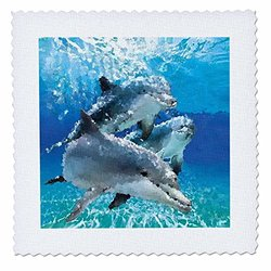 3dRose Dolphins - Quilt Square, 12 by 12-Inch (qs_4852_4)