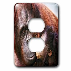3dRose lsp_53282_6 Orangutan N Baby 2 Plug Outlet Cover