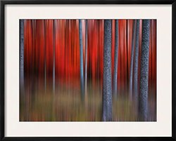 """Gimick by Philippe Sainte-Laudy Framed Photographic Print - 24""""x30"""""""