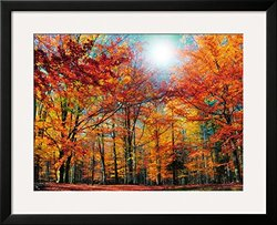 "Art.com Camouflage by Philippe Sainte-Laudy Framed Photographic Print, 25 x 31"", Yellow"