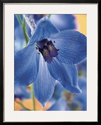Art Blooming Delphinium Framed Photographic Print - Blue