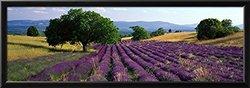 """Art """"Flowers Lavender Field"""" Framed Print - Purple - Size: 14""""x 38"""""""