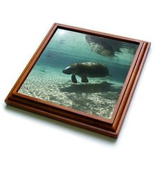 "3dRose trv_89262_1 Florida, Crystal River. Florida Manatees US10 RJA0014 Rebecca Jackrel Trivet with Ceramic Tile, 8 by 8"", Brown"