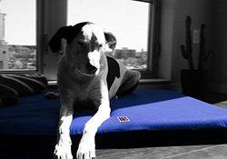 H4Legs Orthopedic Dog Bed, Medium, Navy Blue