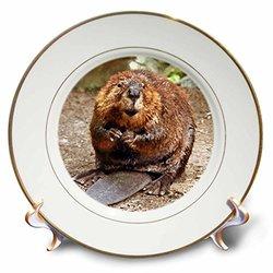 3dRose 8-inch Porcelain Plate w/ two 24k gold rims - Beaver