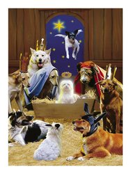 Avanti Press Cards The 12 Dogs of Christmas - Size: 100 Counts