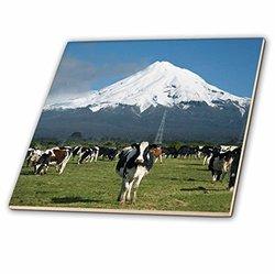 "3dRose Dairy Cows Farm Animals Taranaki Wall Ceramic Tile - Size: 6"""