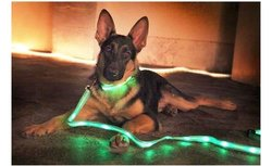 MWGEAR LED Dog Collar and Leash Set - Pink
