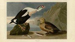 FrameTheTV Digital HD USB TV Art - Society's Birds of North America