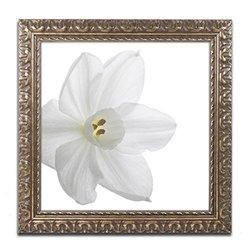 """Trademark Fine Art Paper White by Kurt Shaffer Artwork, 16 by 20"""", Gold Ornate Frame"""