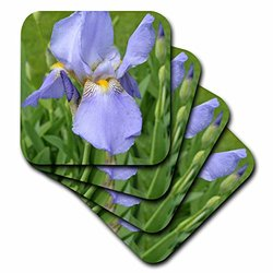 3dRose cst_22659_2 Purple Iris Soft Coasters, Set of 8