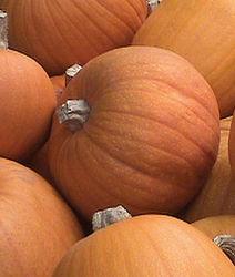 Activz Organic & Non-Gmo Pumpkin Powder - 10.1 oz.