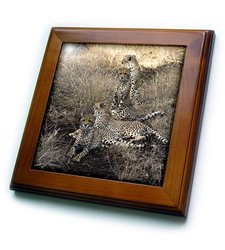 "3dRose 8"" x 8"" 4 Cheetahs Posing Looking in Both Directions Framed Tile"