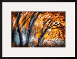 "Art.com Autumn Breeze by Ursula Abresch Framed Art Print, 26 x 34"", Orange"