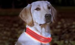 Animal Planet Adjustable LED Dog Collar - Orange - Size: Small