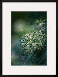 """Art.com In the Morning by Ursula Abresch Framed Art Print, 34 x 26"""", Green"""