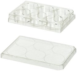BD Falcon Clear Polystyrene Sterile 6 Well Tissue Culture Plate