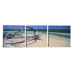 iCanvasART 3-Piece Driftwood on Green Island - 48 x 16-Inch