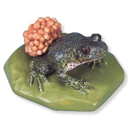 3B Scientific VN707 Alytes Obstetricans Midwife Toad Replica