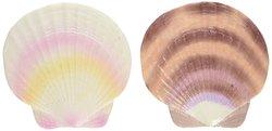 Sea Shell Mixed Ornament Decoration Box - Purple/White