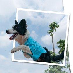 Urban Dog Wear Polo Pique shirt, size 7, fuchsia