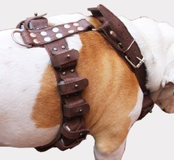 Leather Weighted Dog Harness for Exercise Fits 35-40 Chest - Brown