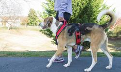 Petsafe Easy Sport Dog Harness - Red - Size: Small
