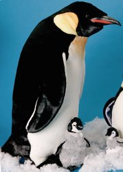 "Orville Large Emperor Penguin 33"" by Douglas Cuddle Toys"